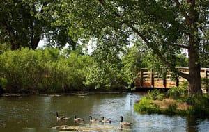 Birding in the gardens july bird walk for Hudson gardens concert schedule
