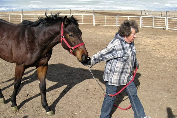 how to train a racehorse