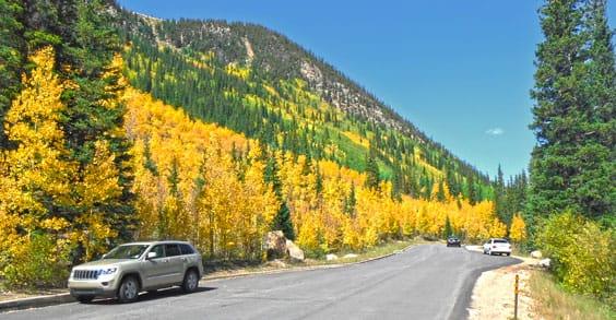 photo of yellow Apsen tress