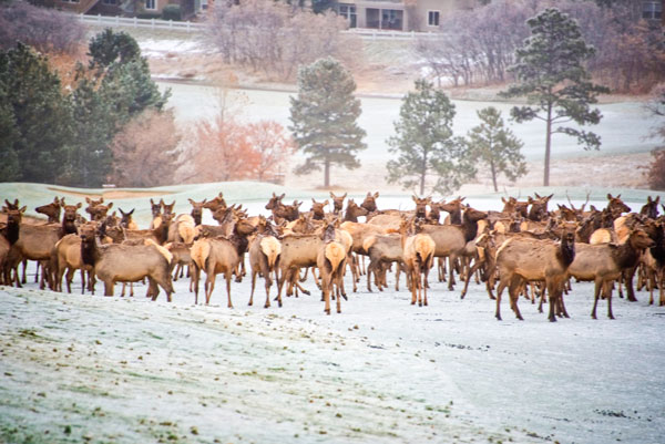 Elk Castle Pines CO