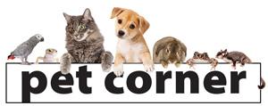 Graphic of Pet Corner Header