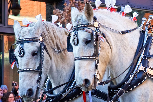 Photo of horses 2020 National Western Parade