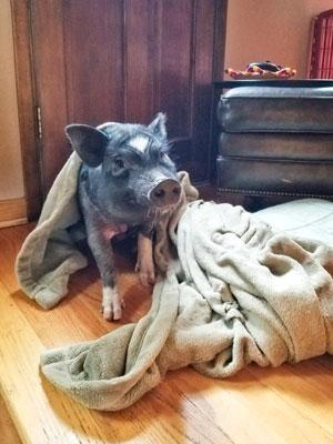 Photo in blanket Zadie May Sassypants.