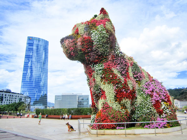 Photo of flower dog in Spain