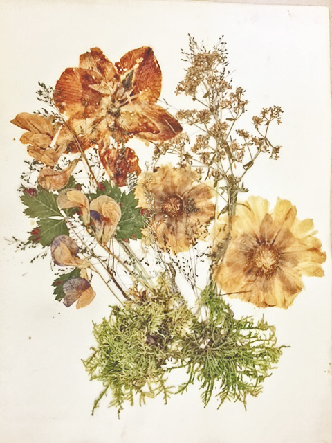 Pressed flower arrangements prepared by Sarah Bennett Walker