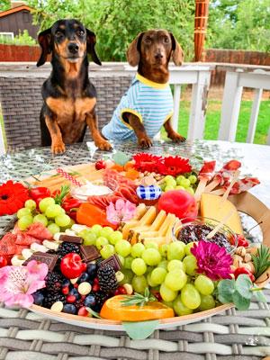 Photo Sofie, Aragon's rescue dachshund and her boyfriend, Snoop