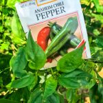 Photo of Anaheim Chili Pepper seed packet