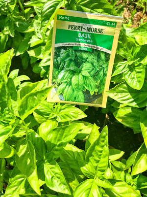 Photo of basil seed packet