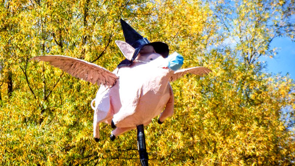 Photo of paper mache pink pig with witch hat