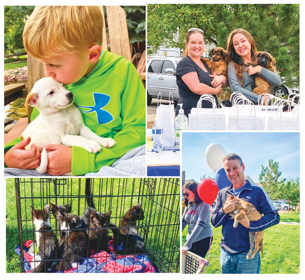 Collage of dog adoption event