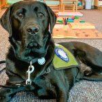 Photo of DCS Montessori dog Yampa