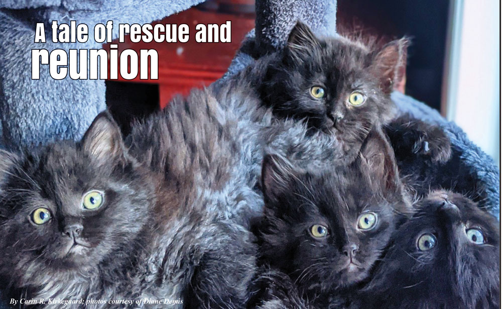 Photo of rescued kittens