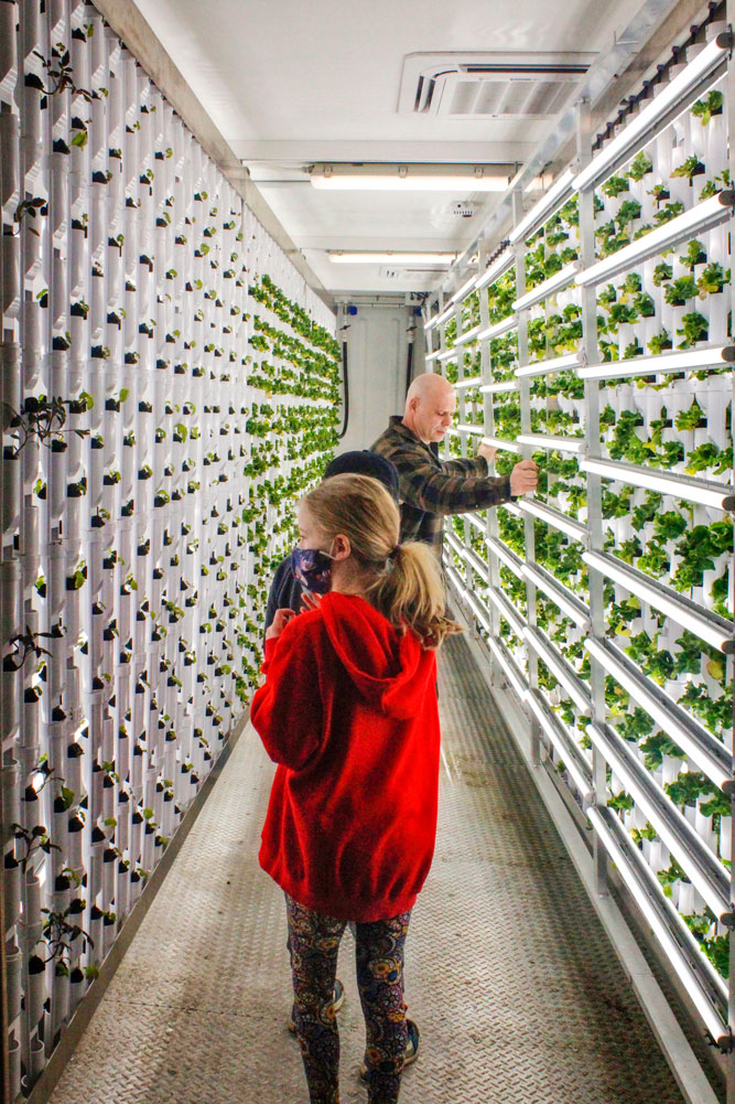 Photo of sensor-based vertical hydroponic farm.