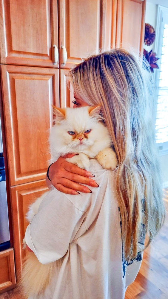 Photo of Ollie, an 8-month-old Flame Point Himalayan Persian cat