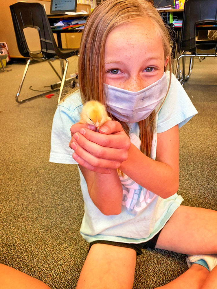 Photo of student at TTE holding newly hatched chick.