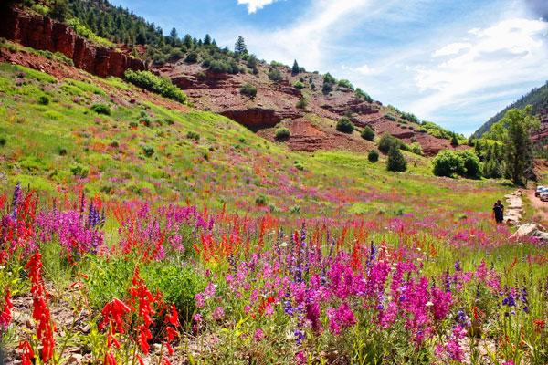 Photo of Colorado wildflowers