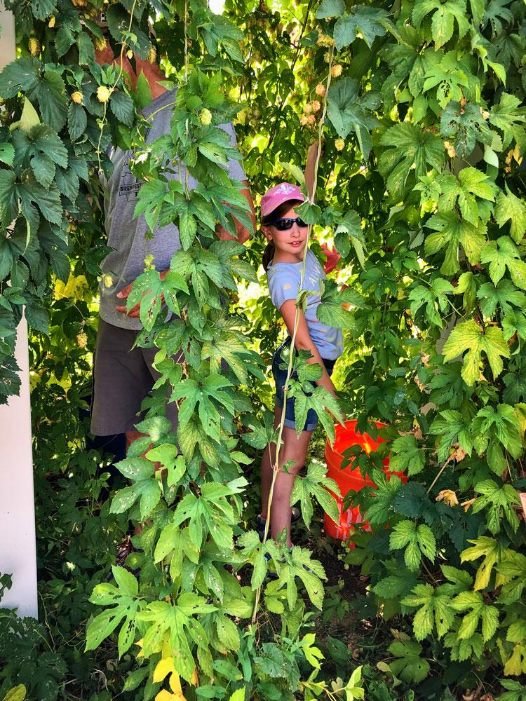 Photo of girl harvesting hops
