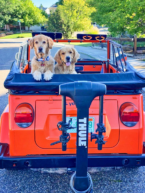 Photo of the Tankersleys' golden retrievers, Bo and Scout, riding in classic VW Thing.